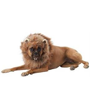 King of the Jungle Lion Man Dog Costume