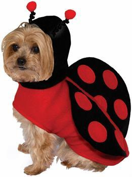 Lady Bug Pet Costume - X-Small