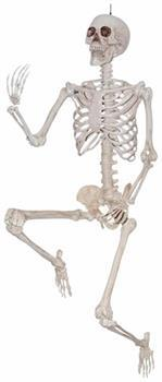 Halloween Decoration: 5' Pose and Hold Skeleton