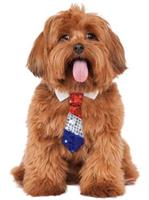 Patriotic Tie Pet Costume