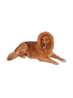 Deluxe Lion's Mane for Pets