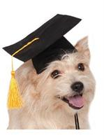 Black Graduation Hat Pet Costume