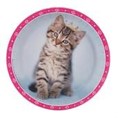 Rachaelhale Glamour Cats Party Supplies & Decorations
